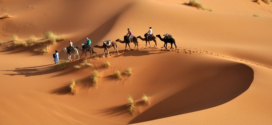 What is camel trekking all about